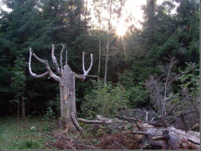 surnudpuud