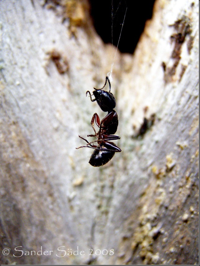 SipelgasVõrgus
